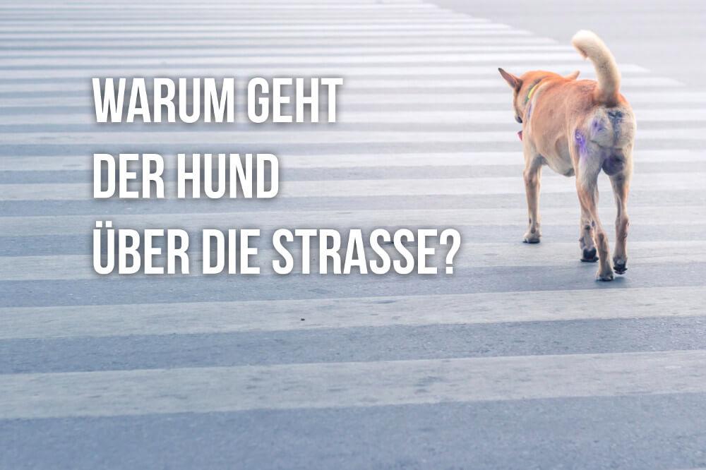 Warum geht der Hund über die Straße?