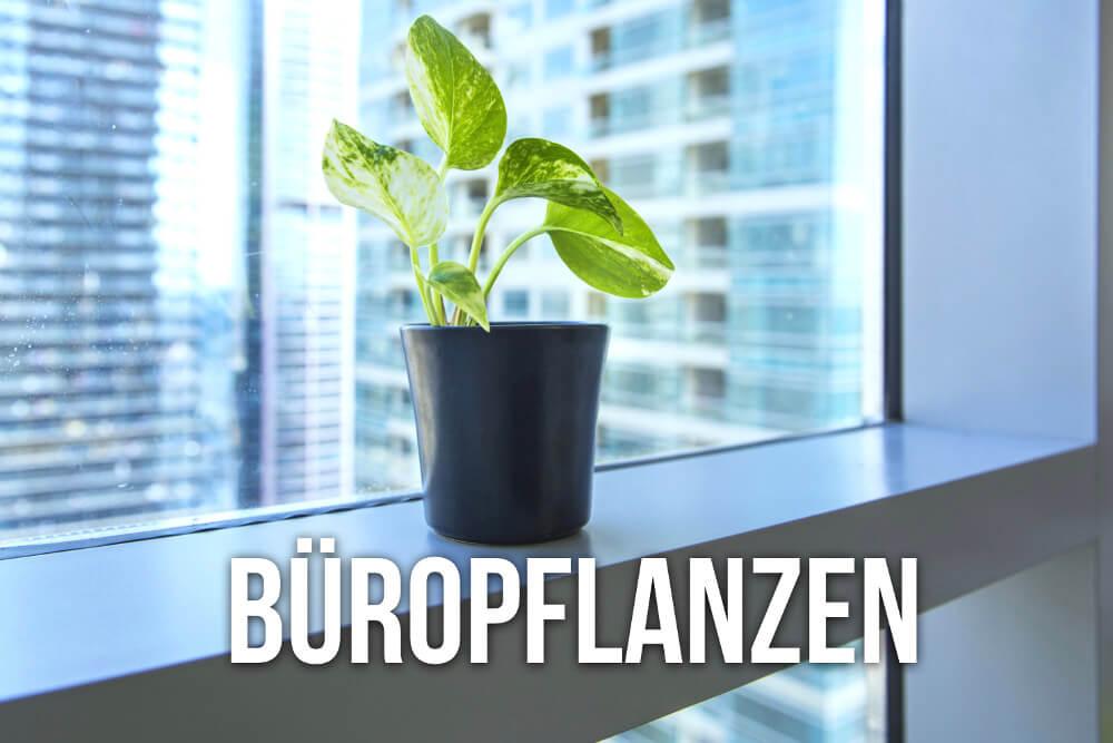 Buropflanzen Das Sind Die Beliebtesten Karrierebibel De
