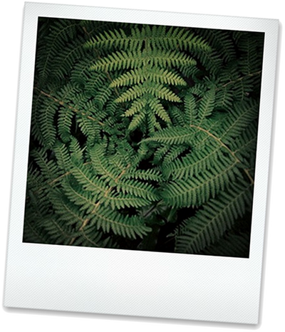 Beliebte Büropflanzen