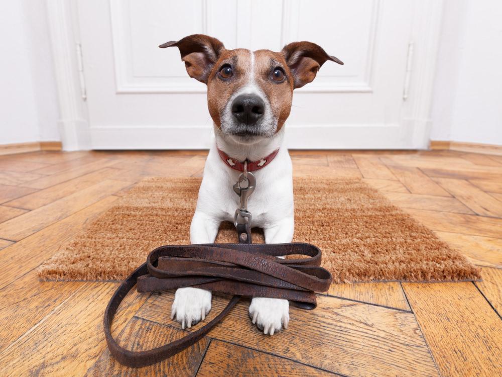 Haustier-Hund-Katze-Test
