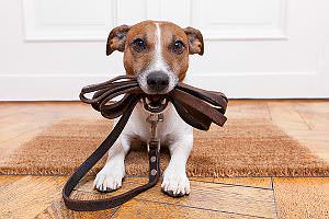 Haustier-Hund