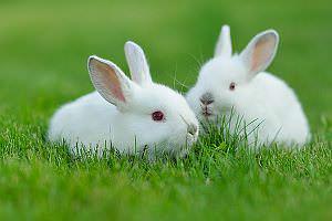Haustier Kaninchen