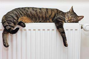 Haustiertest-Katze
