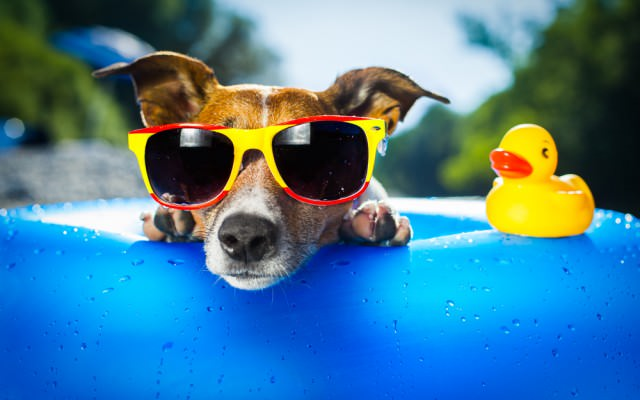Sonnenbrille-Cool-Hund-Sommer