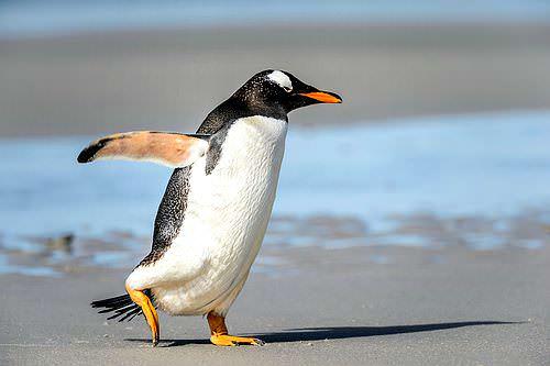 Pinguin-Prinzip