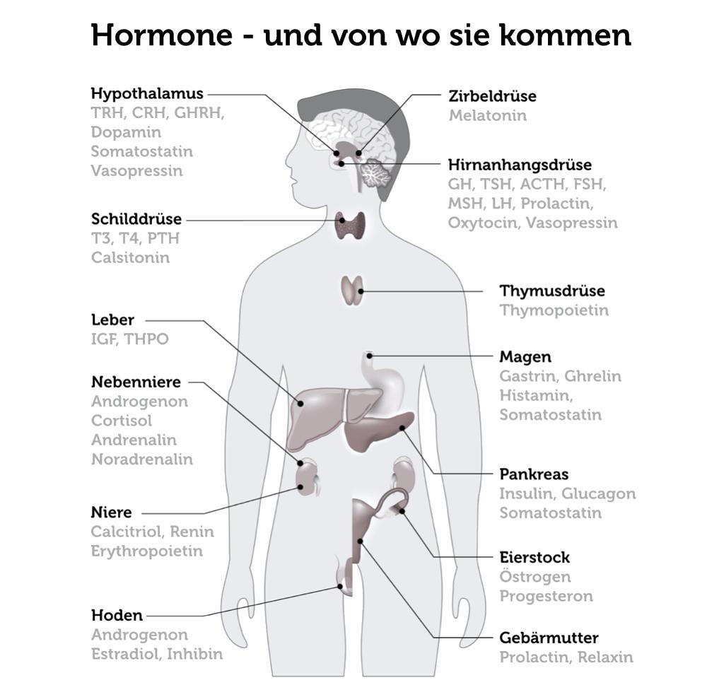 Hormone-Koerper-Infografik-Designua