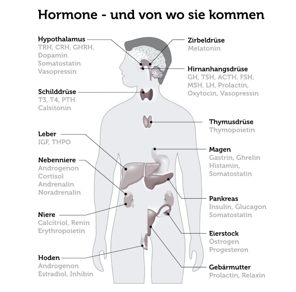 Stress Hormone Koerper Ursachen Folgen