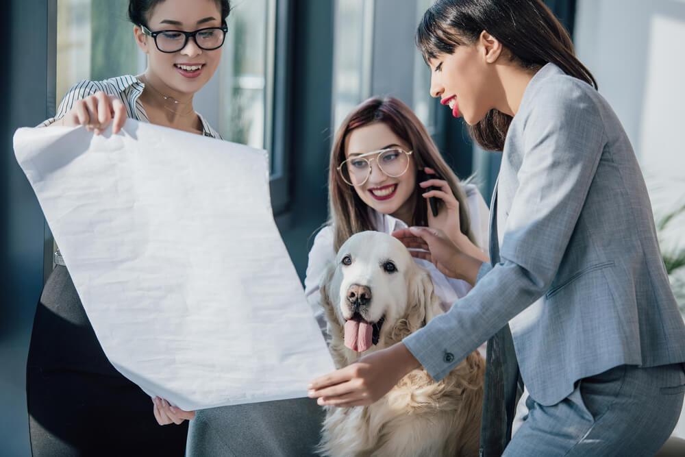 Haustiere Buero Buerohund Hund Produktivitaet