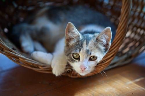 Katze-Katzencontent-Catcontent