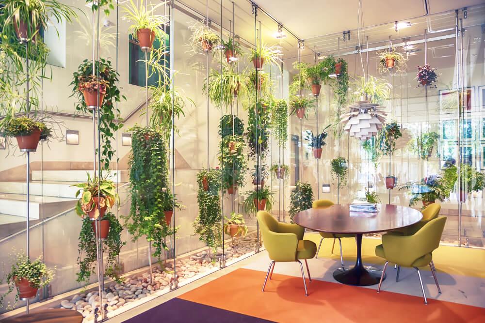 Büropflanzen steigern Produktivität um 15 Prozent
