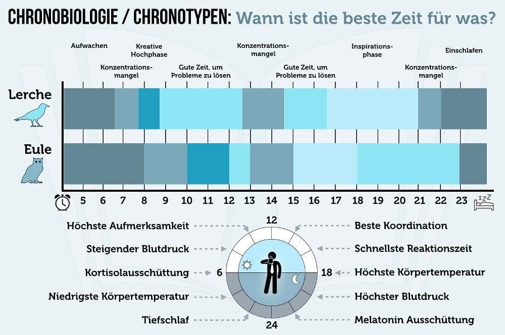 Chronobiologie Chronotypen Eule Lerche Vergleich Biorhythmus Grafik