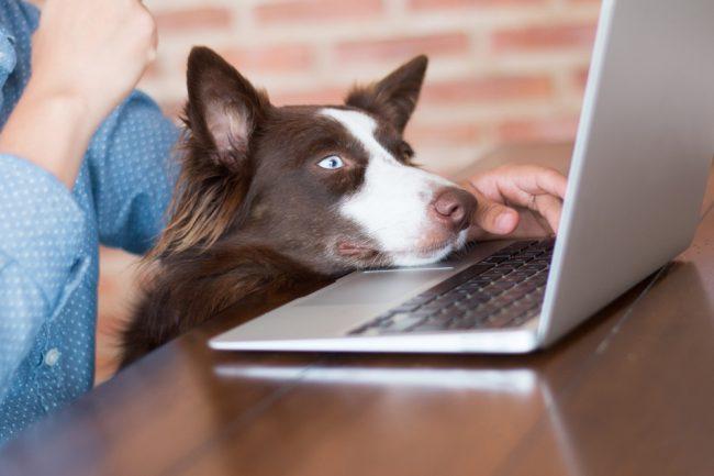 Hund im Buero Haustier Buerohund Arbeitsrecht Erfahrungen Studie Rechtslage