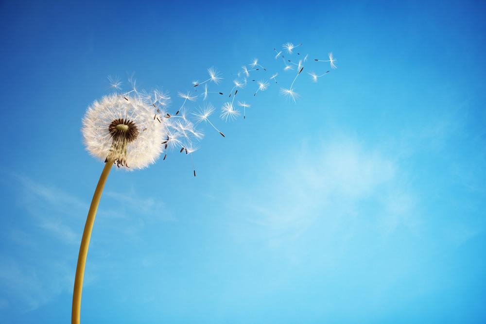 Soll-Zustand: Leben lernen