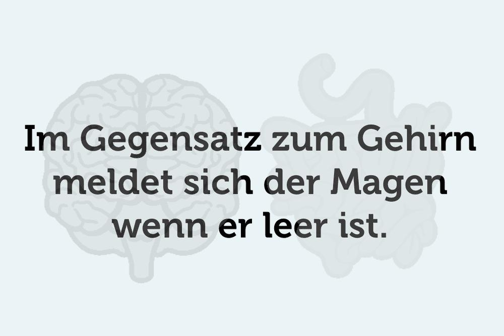 Gehirn Magen Leer Unnuetzes Wissen