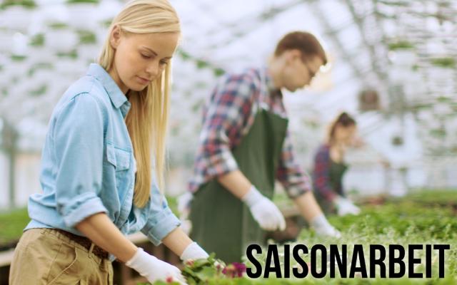 Saisonarbeit Landwirtschaft Gastronomie Jobs Informationen