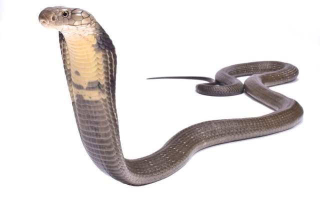 Kobra Effekt gut gemeint schlimmer Verschlimmbesserung