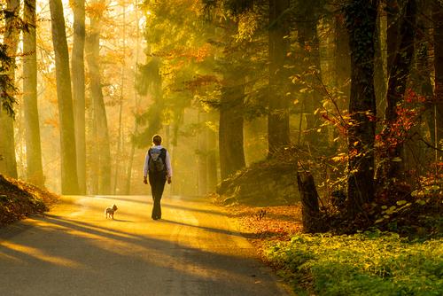 Spazieren-wandern-denken-lernen
