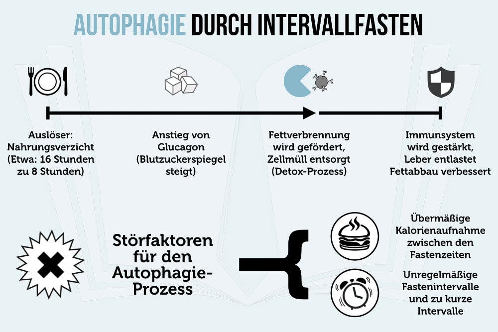 Intervallfasten Autophagie Fettabbau Diaet Wirkung Grafik